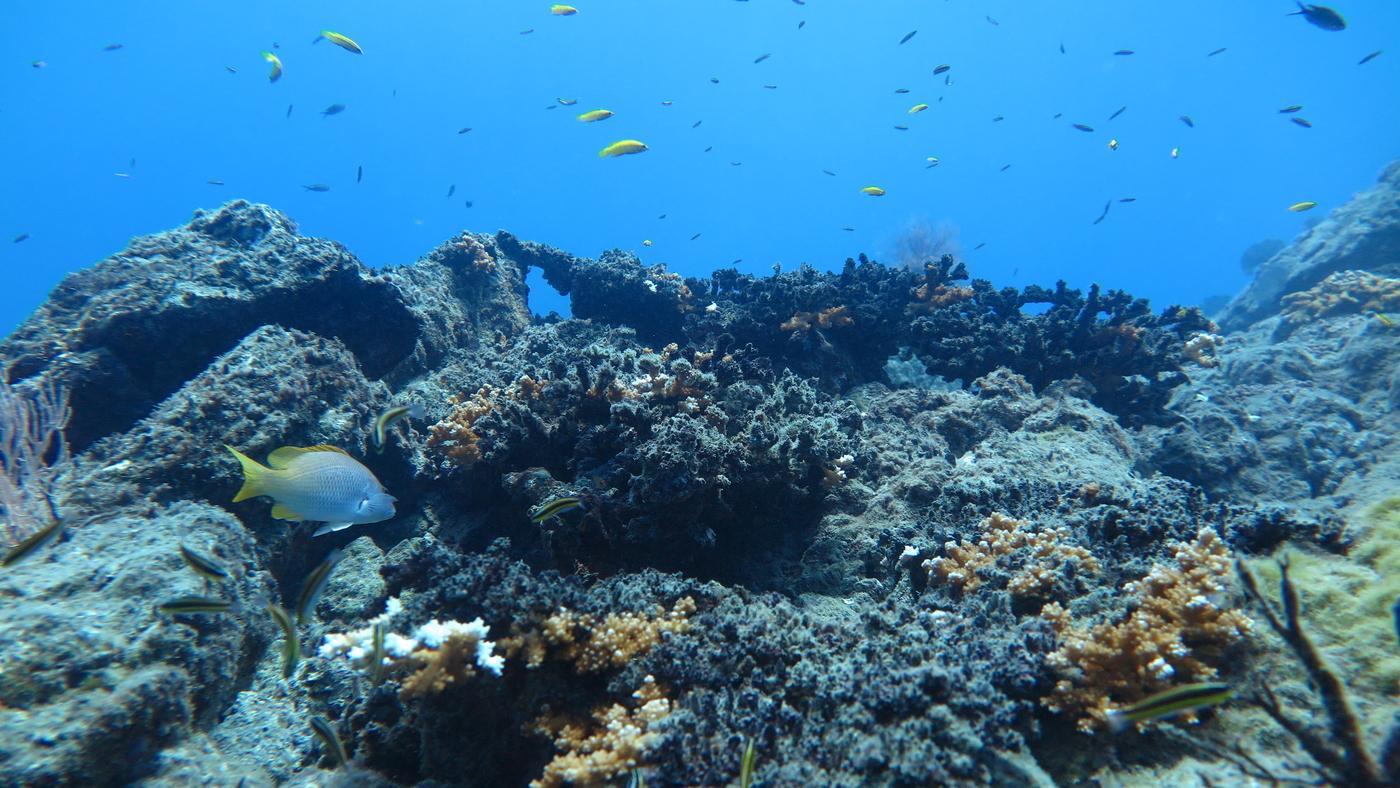 Caño Island Tour, South Pacific Costa Rica (1)