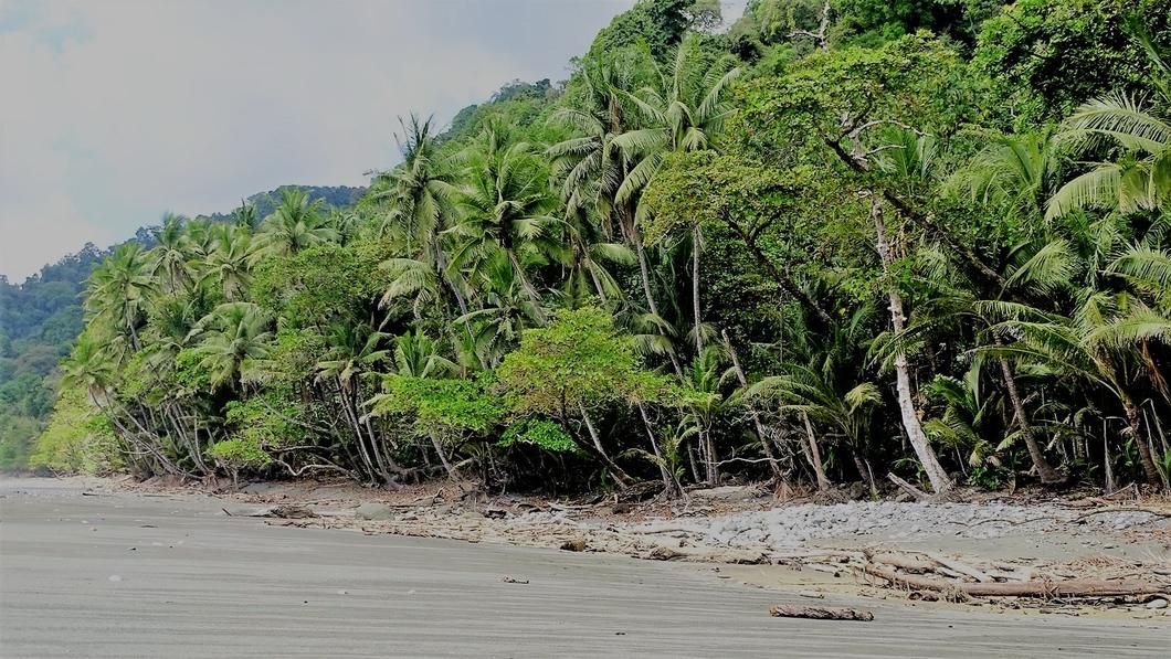 Corcovado National Park - amigos area conservación osa 1