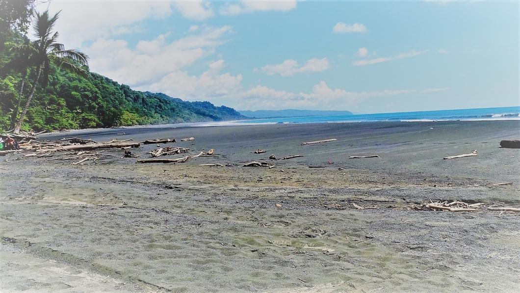 Corcovado National Park - amigos area conservación osa 6