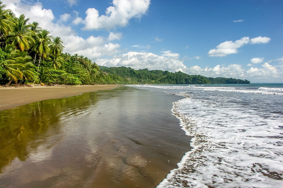 Cristal-Ballena-Area-Beach, birders paradise