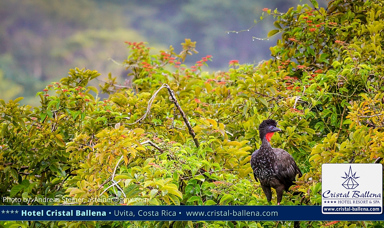 Cristal Ballena Birders Paradise