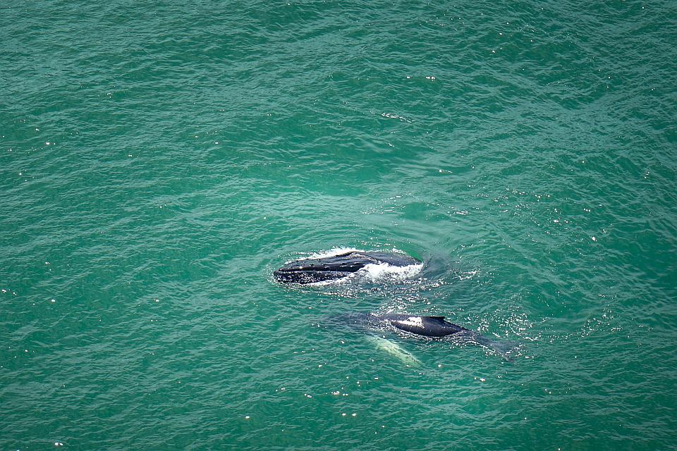 Cristal Ballena, pura vida, whales, birders paradise
