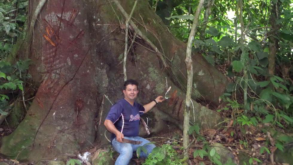 horseback riding, lalo tours ojochal, ballenatales, costaballenalovers, baco tree,
