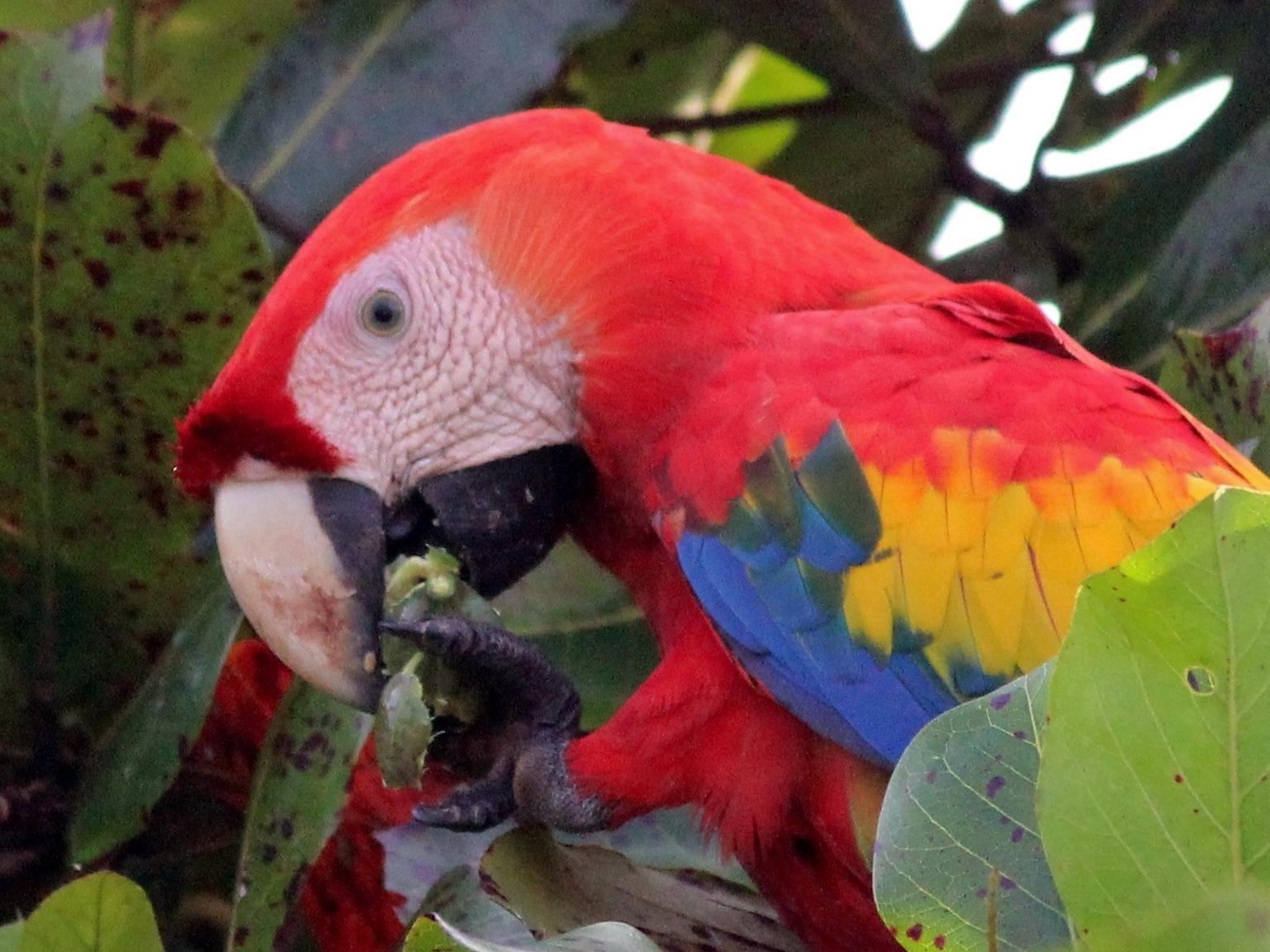 kokopelli-aeamacaw-wildlife-mangrove-tour-corcovado-2