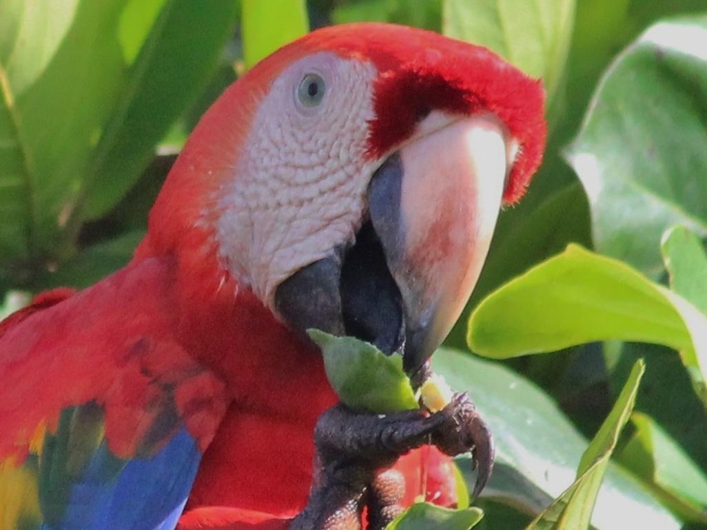 kokopelli-aeamacaw-wildlife-mangrove-tour-corcovado-3