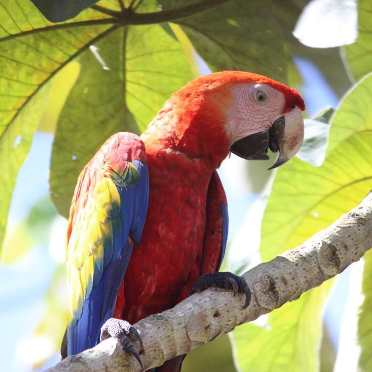 kokopelli-aeamacaw-wildlife-mangrove-tour-corcovado-6