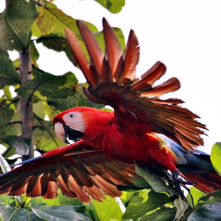 kokopelli-aeamacaw-wildlife-mangrove-tour-corcovado