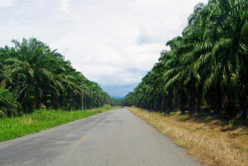 camino-sierpe-kokopelli-restaurant-ballena-tales-tours-mangrove