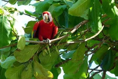 kokopelli-sierpe-kokopelli-sierpe-restaurant-tours-mangrove-corcovado-nature-sierpe-tour-02
