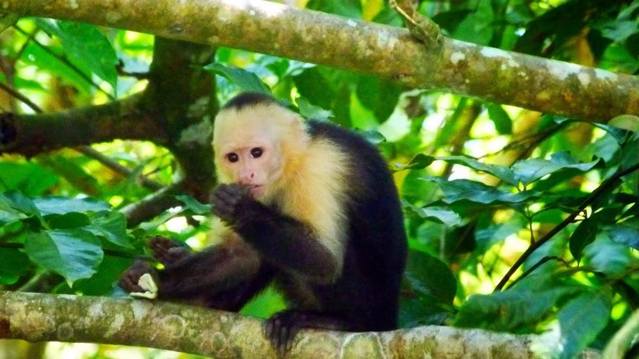 kokopelli-sierpe-kokopelli-sierpe-restaurant-tours-mangrove-corcovado-nature-sierpe-tour-16