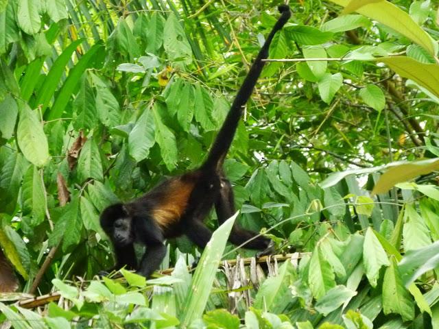 kokopelli-sierpe-kokopelli-sierpe-restaurant-tours-mangrove-corcovado-nature-sierpe-tour-20