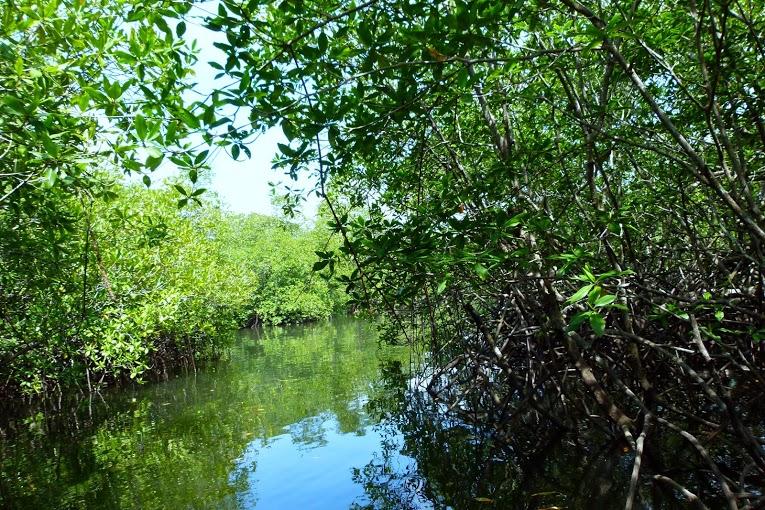 kokopelli-sierpe-kokopelli-sierpe-restaurant-tours-mangrove-corcovado-nature-sierpe-tour-23