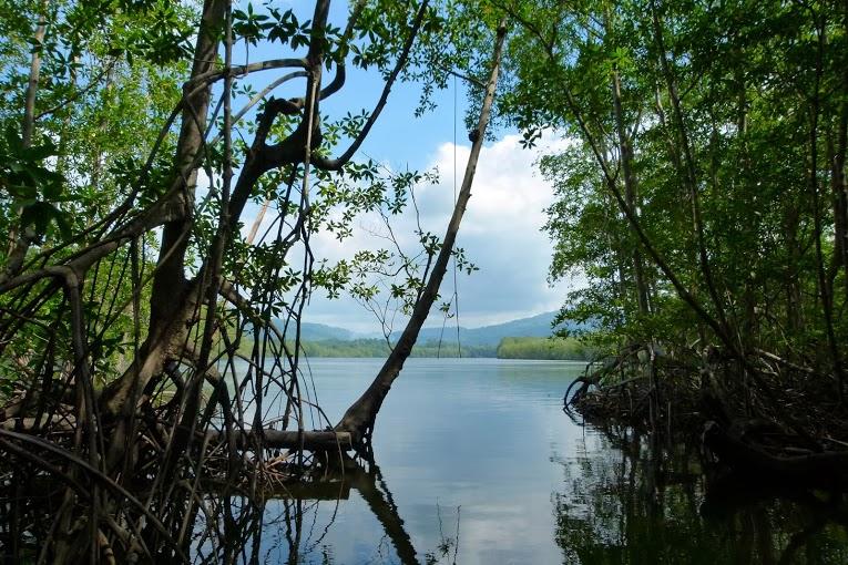 kokopelli-sierpe-kokopelli-sierpe-restaurant-tours-mangrove-corcovado-nature-sierpe-tour-26
