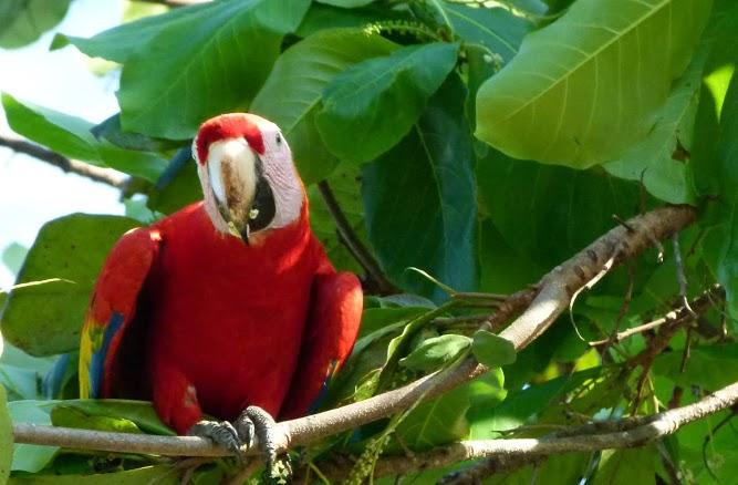 kokopelli-sierpe-kokopelli-sierpe-restaurant-tours-mangrove-corcovado-nature-sierpe-tour-27