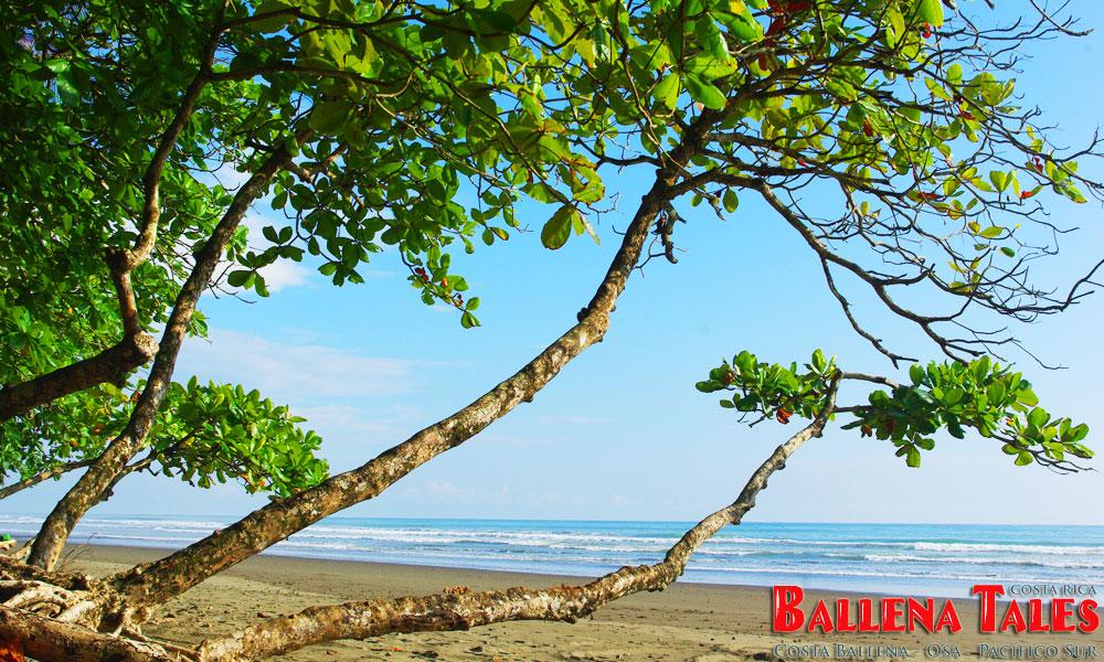 Playa-Matapalo
