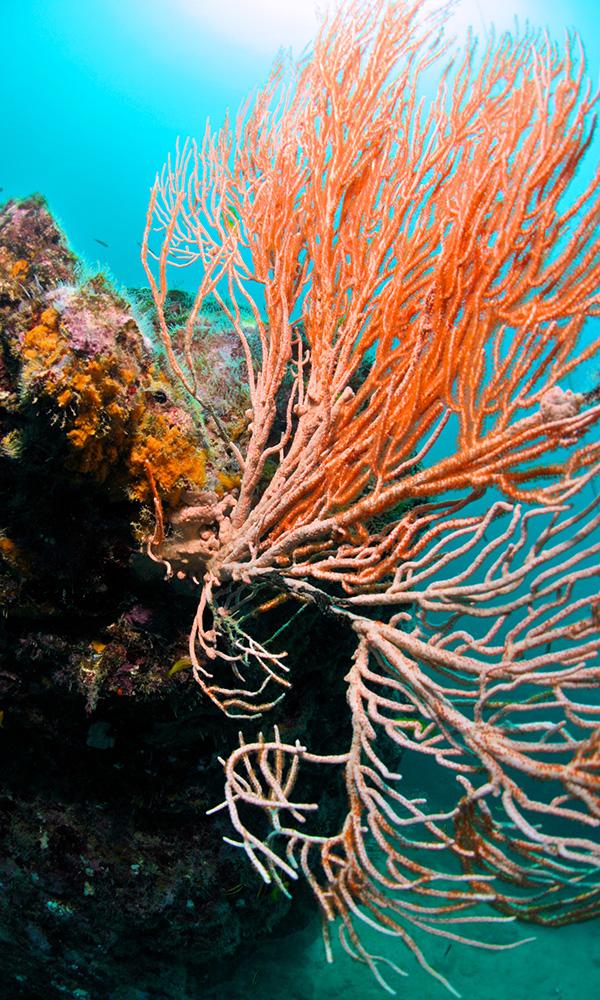corals-david-garcia