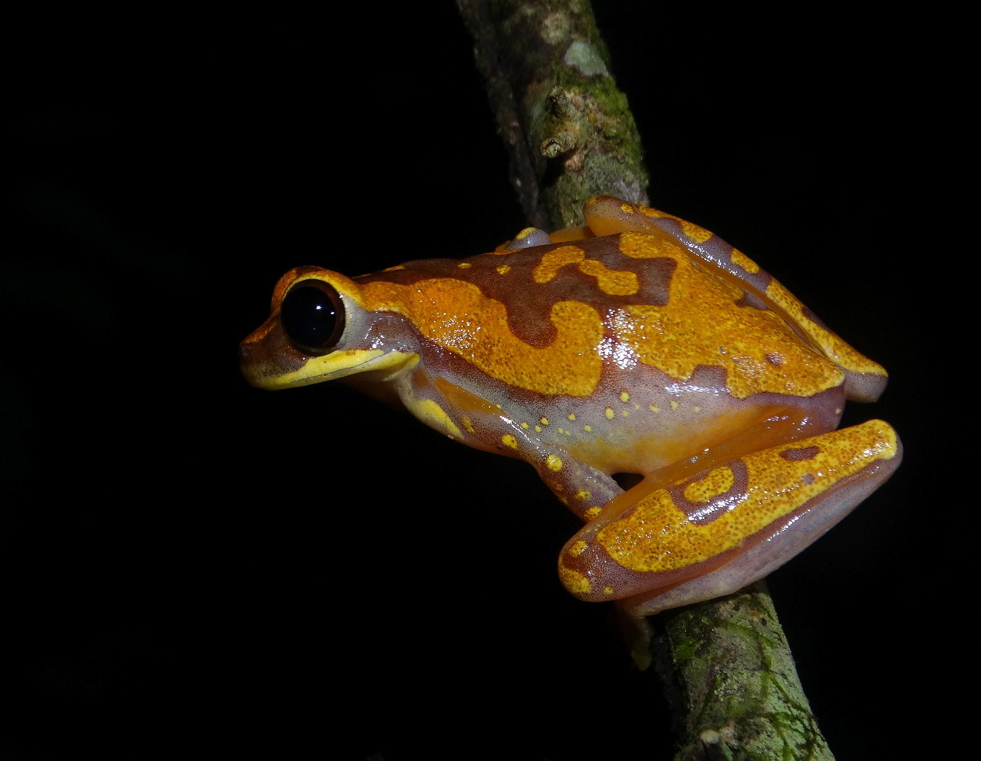#nightlife #wildlife #caminatas #hiking #costaballenalovers #osa #wildlife #walks #costaricavacations #adventure(4)
