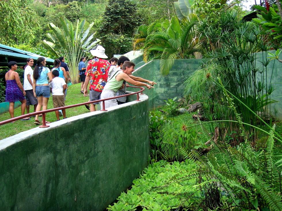 sel_lush_outdoor_terrariums