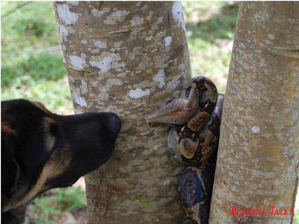 fer-de-lance-and-dog-2