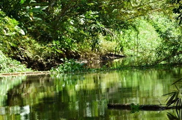 kokopelli-sierpe-kokopelli-sierpe-restaurant-tours-mangrove-corcovado-nature-sierpe-tour-crocodile-nature