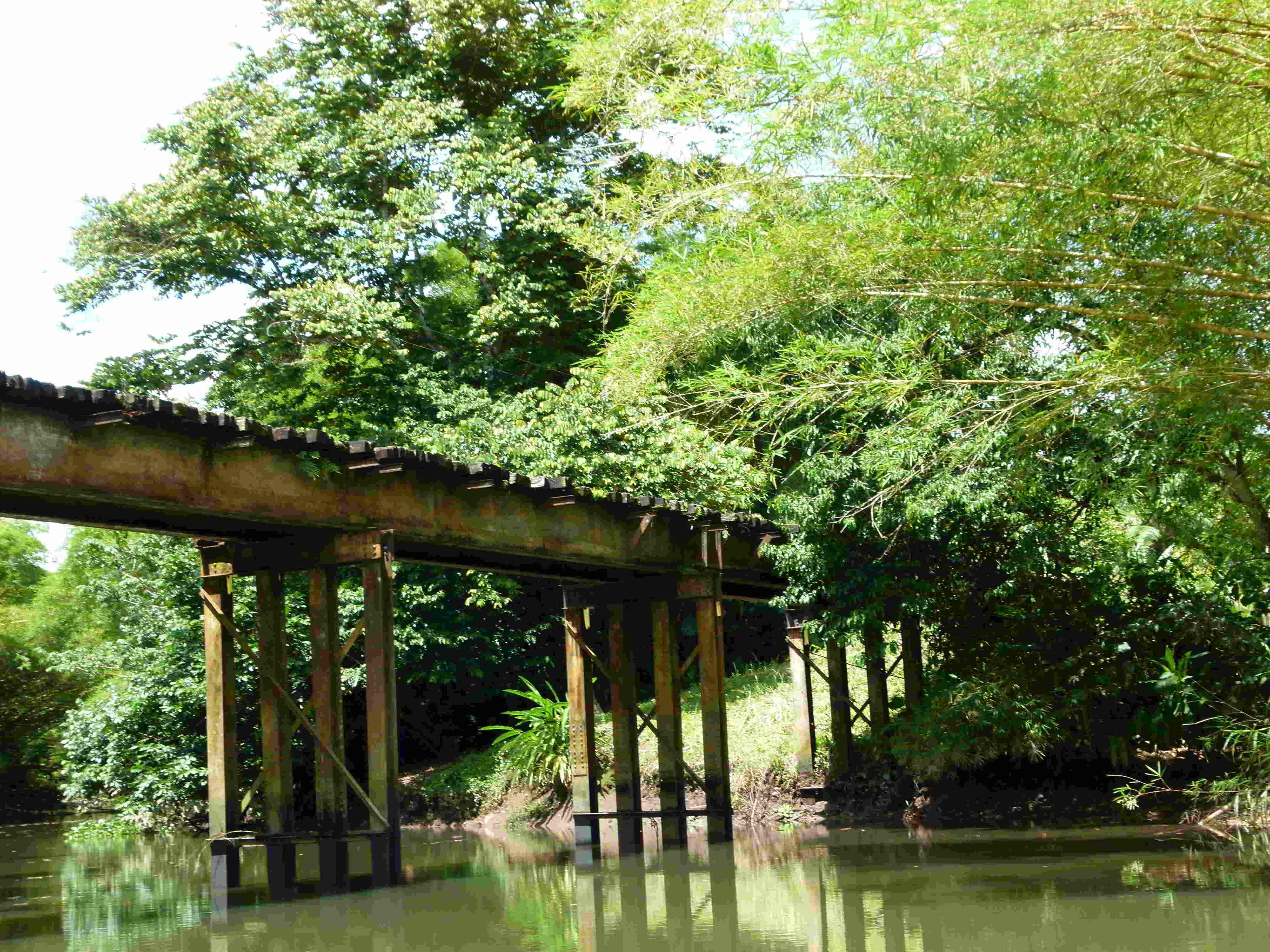mangrove-animal-tour-029