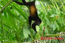 mangrove-tour-monkey