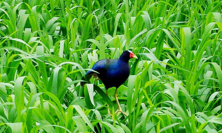 sierpe-birdwatching-paradise-1