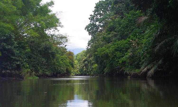 sierpe-mangroves-1