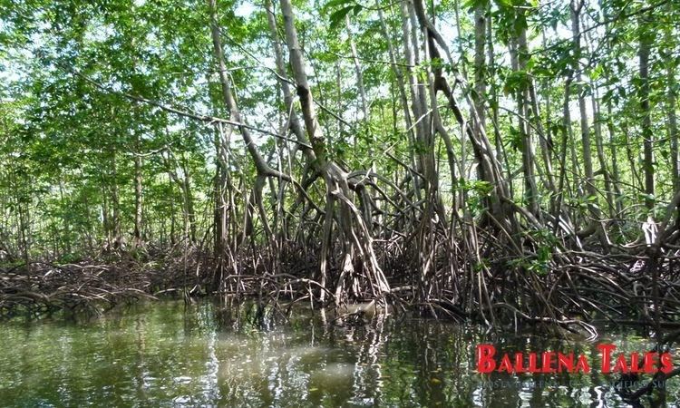 terraba-sierpe-wetlands-1