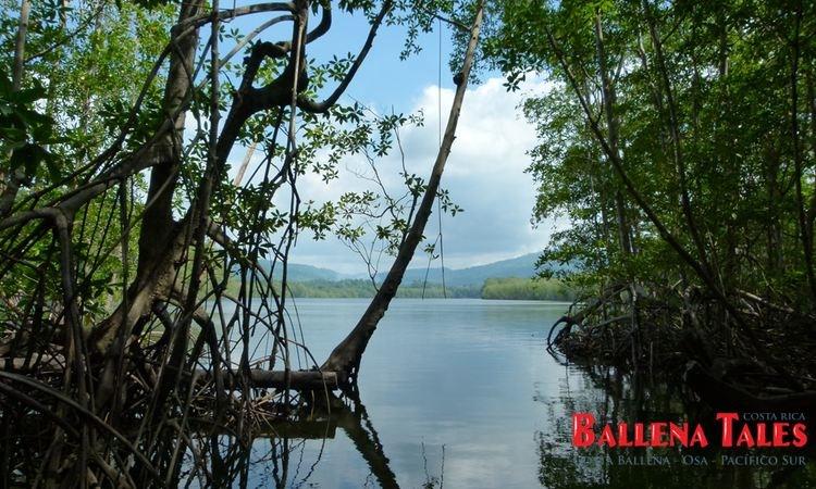 terraba-sierpe-wetlands-3
