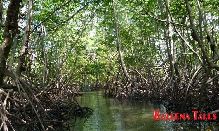 terraba-sierpe-wetlands