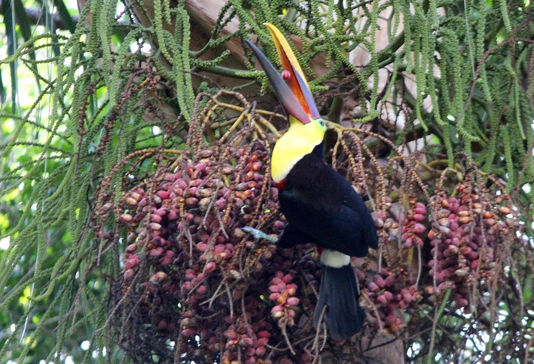Sierpe Very Special for Sighting Wildlife (2)