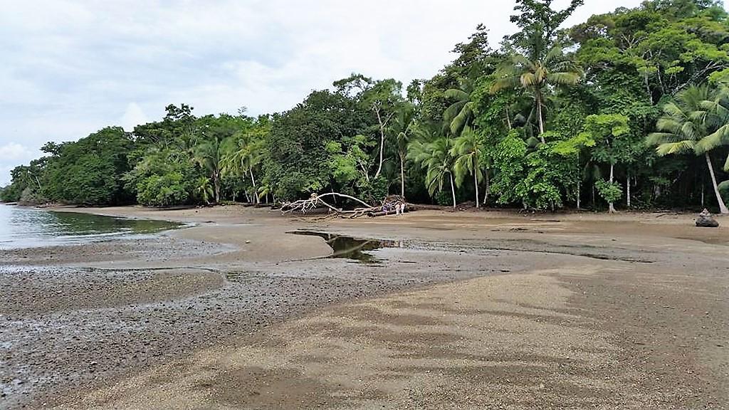 Playa Juanito Mora - Whale Resort (4)