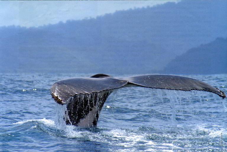 whale-resort-osa-peninsula-puravida-costaballenalovers-villas-for-rent-beachfront-tour