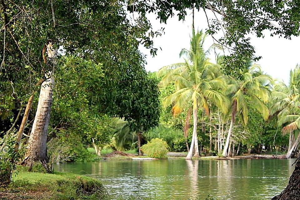 whale-resort-osa-peninsula-puravida-costaballenalovers-villas-for-rent-beachfront