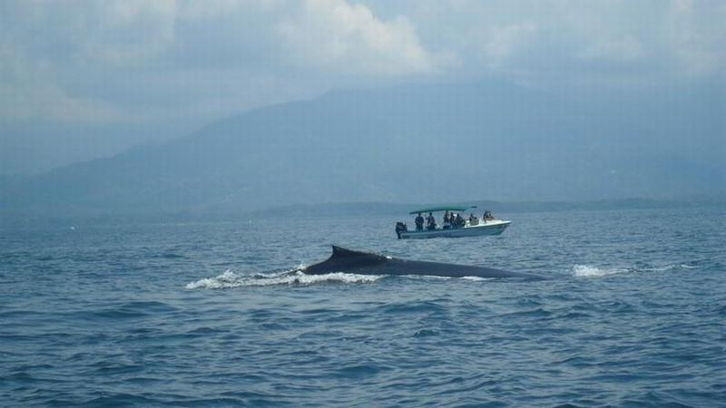 whales-beach-ventanas-windos-costaballenalovers-ballenatales-2
