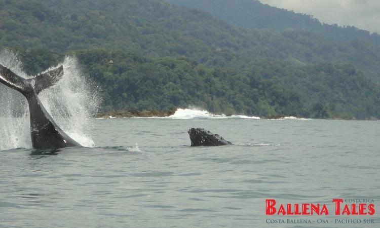 whale-watching-tour-costa-ballena-costa-rica-1