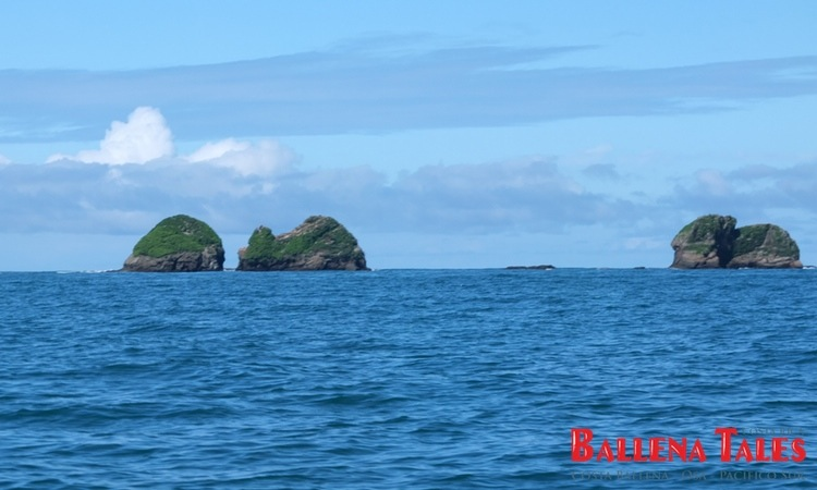whale-watching-tour-costa-ballena-costa-rica-4