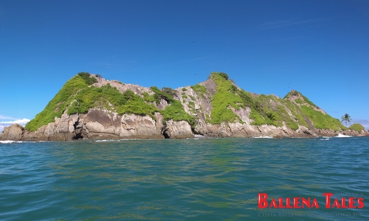 whale-watching-tour-costa-ballena-costa-rica-8