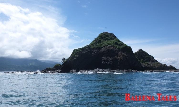 whale-watching-tour-costa-ballena-costa-rica-9
