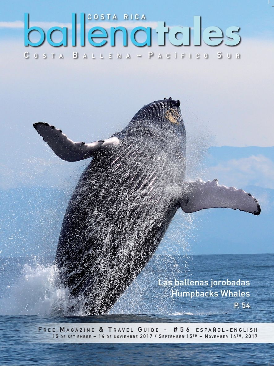 Whales and Dolphin Festival, Humpback Whale in Costa Rica, Ballena Tales Magazine and Travel Guide