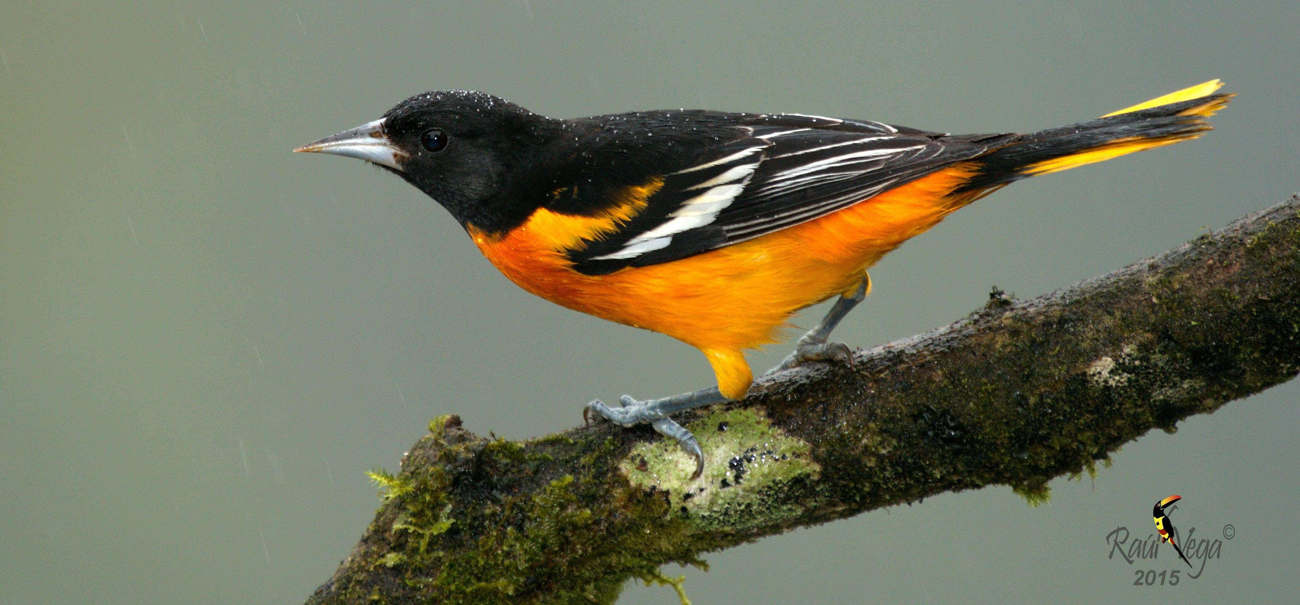 ¡Bienvenida a las aves migratorias!
