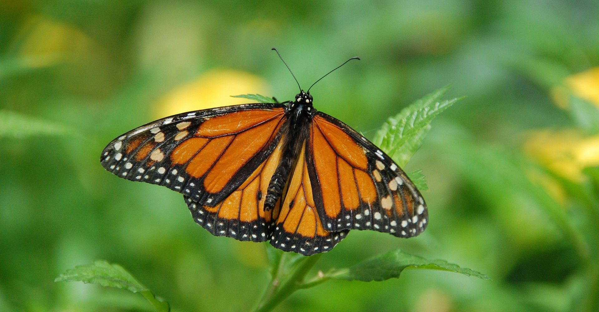 Educando sobre mariposas, Playa Tortuga Reserve - El ciclo de la vida