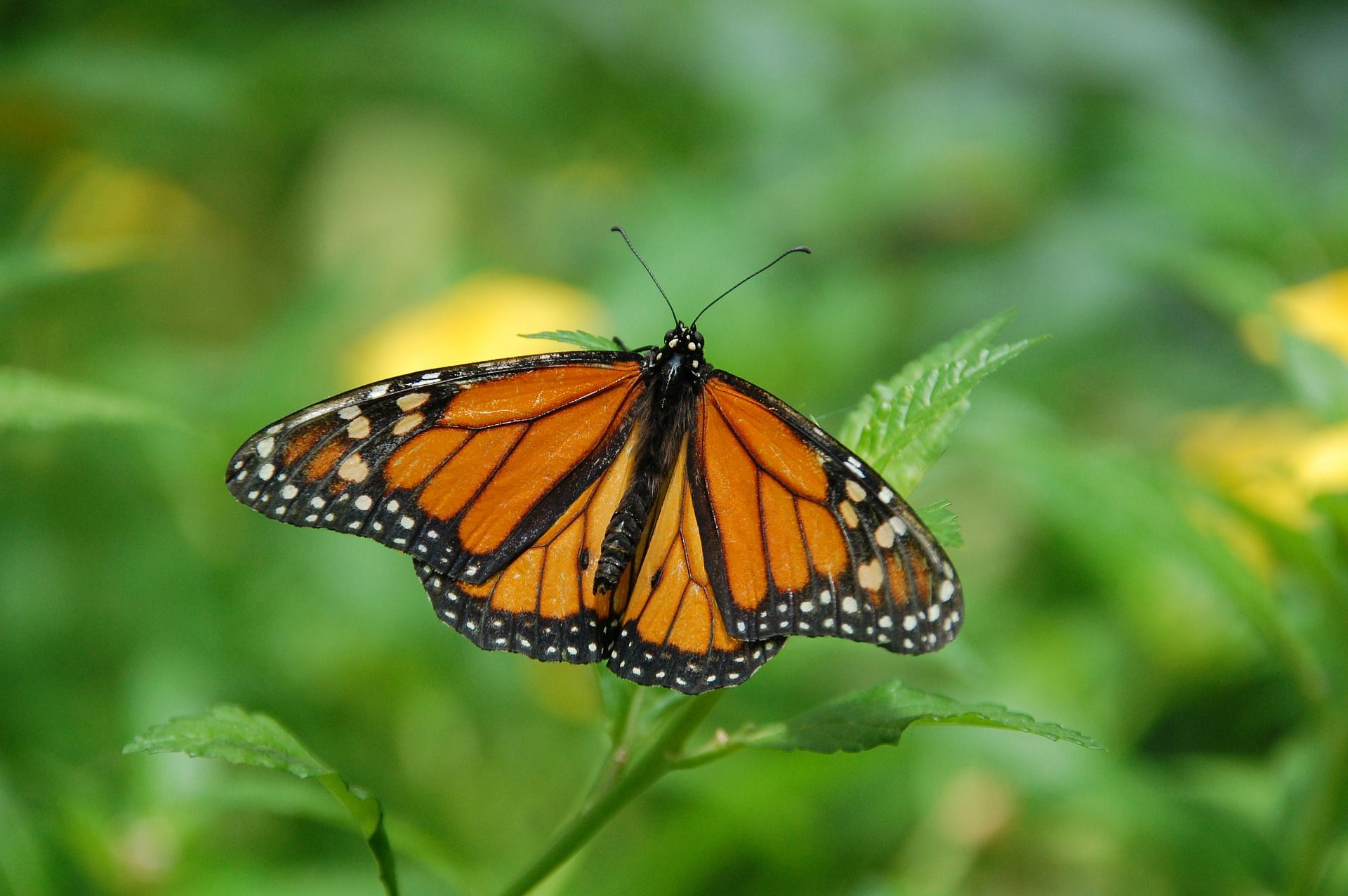 Educando sobre mariposas 3