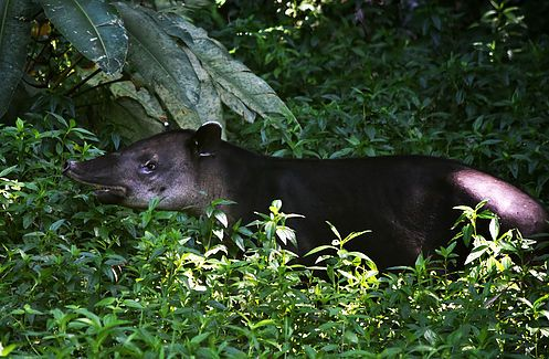 El Jaguar Jungle Lodge 4