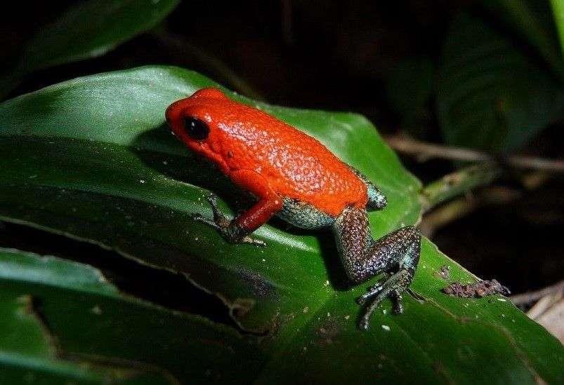 Biodiversidad en Costa Ballena 1