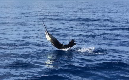 Sportfishing Drake Bay Costa Rica