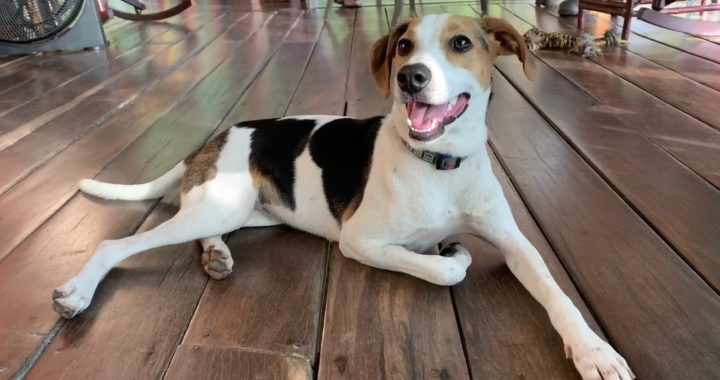 Dawg fundraising- Dog- pets
