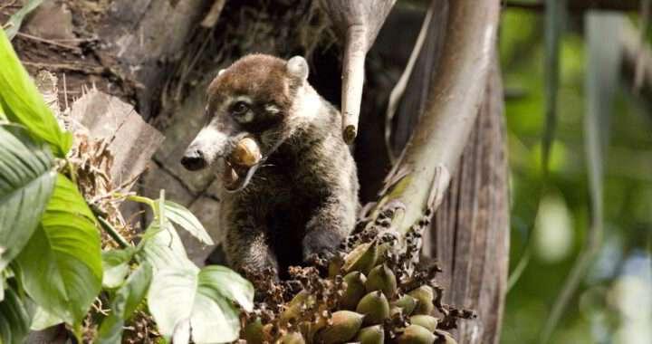 Burbuja Social en la vida silvestre, Wildlife Social Bubbles