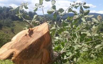 ¿De dónde viene su madera nativa?